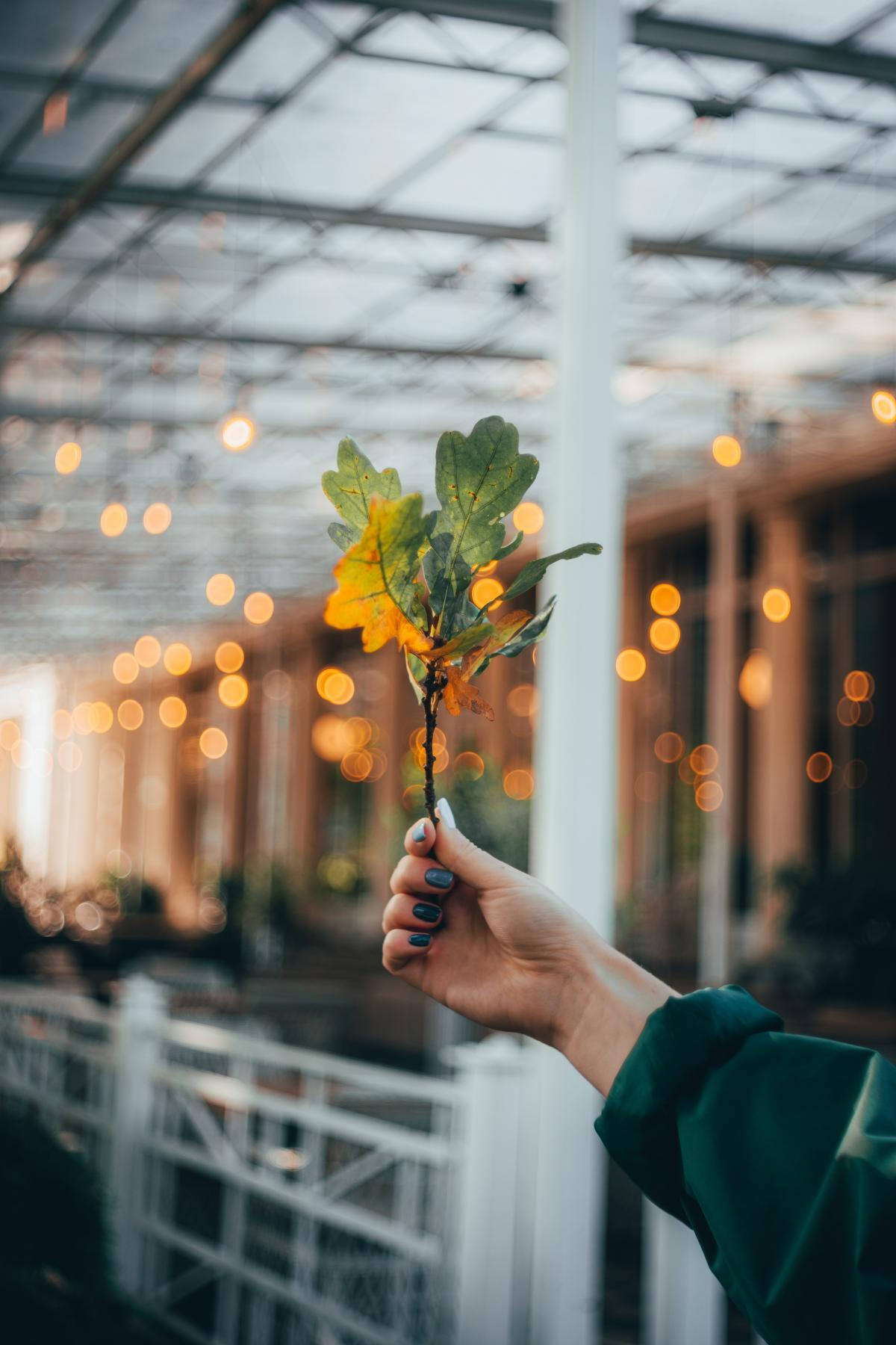 Bouquet Wineglass Bartender #420175