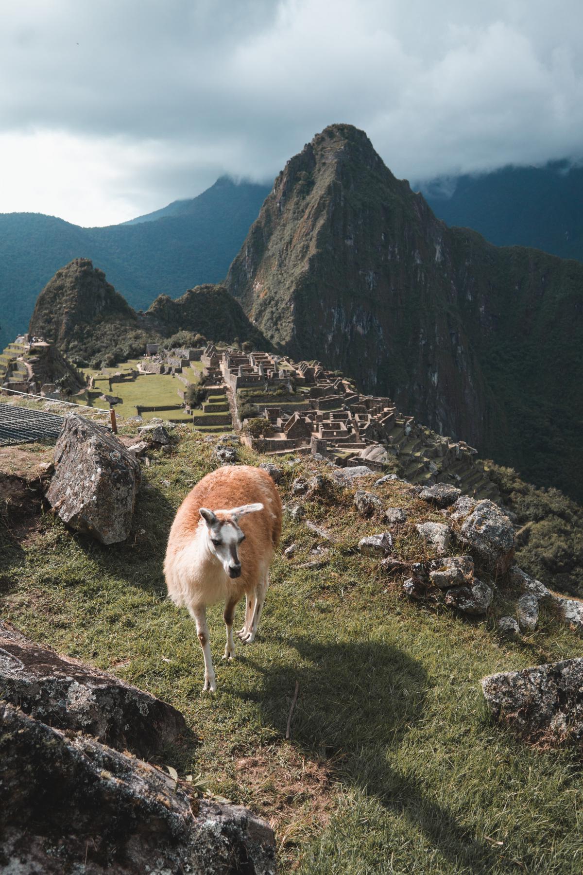 Mountain Llama Mountains #420246