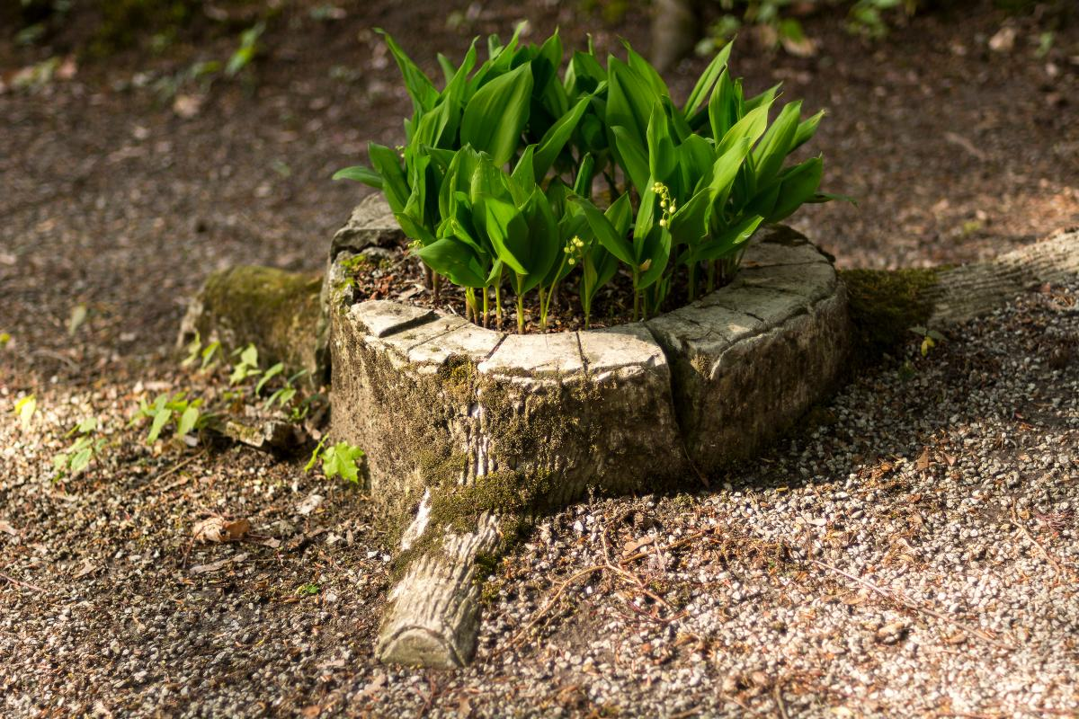 Flowerbed in an Artificial Stump - Free Image For Commercial Use