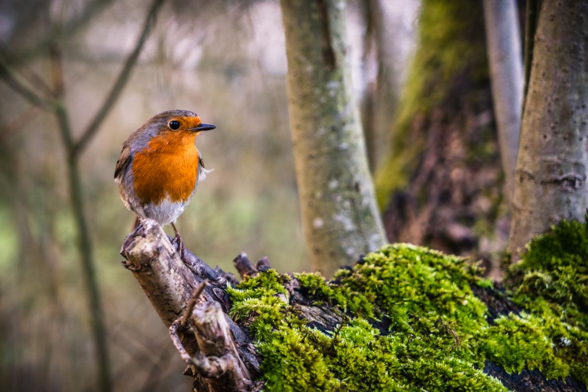 Colorful Bird Perched Free Photo