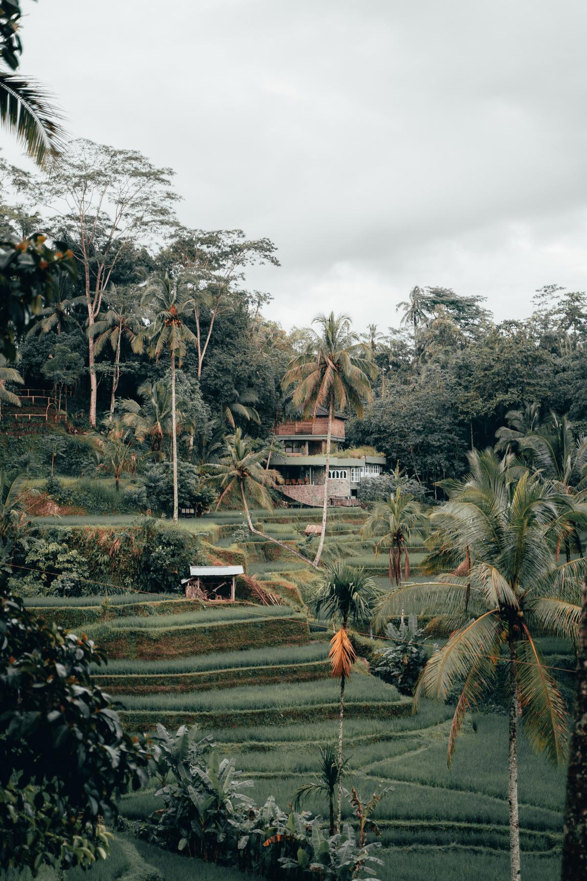 Tree Architecture Building