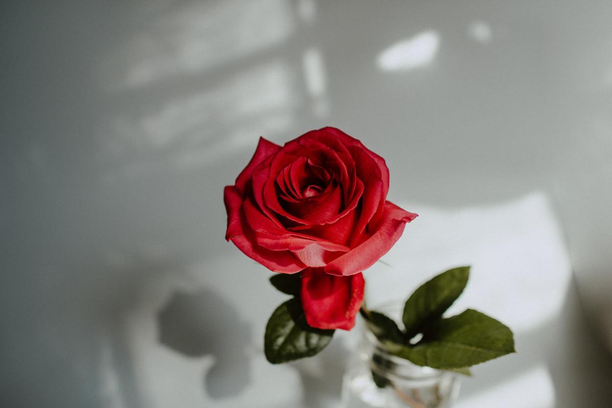 Rose Bouquet Bud