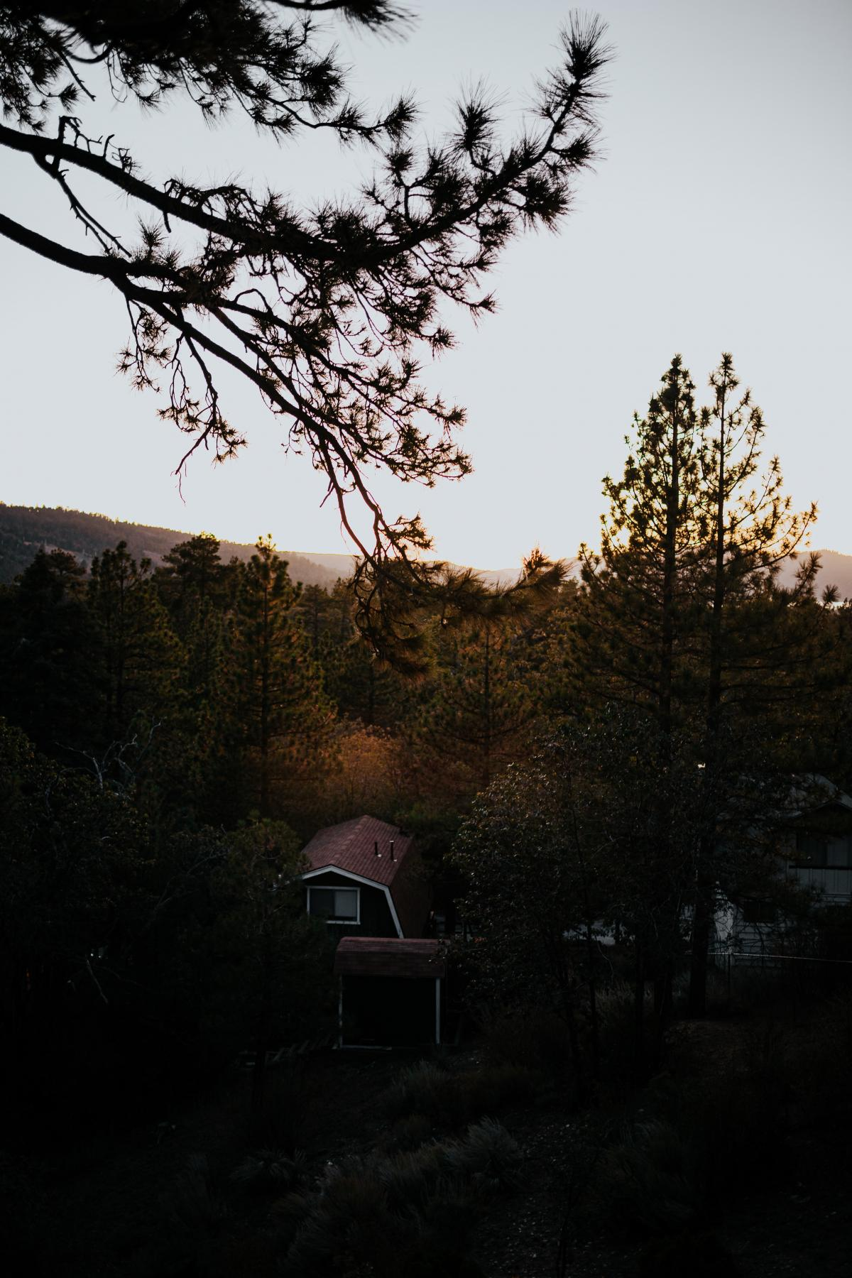 Tree Landscape Forest