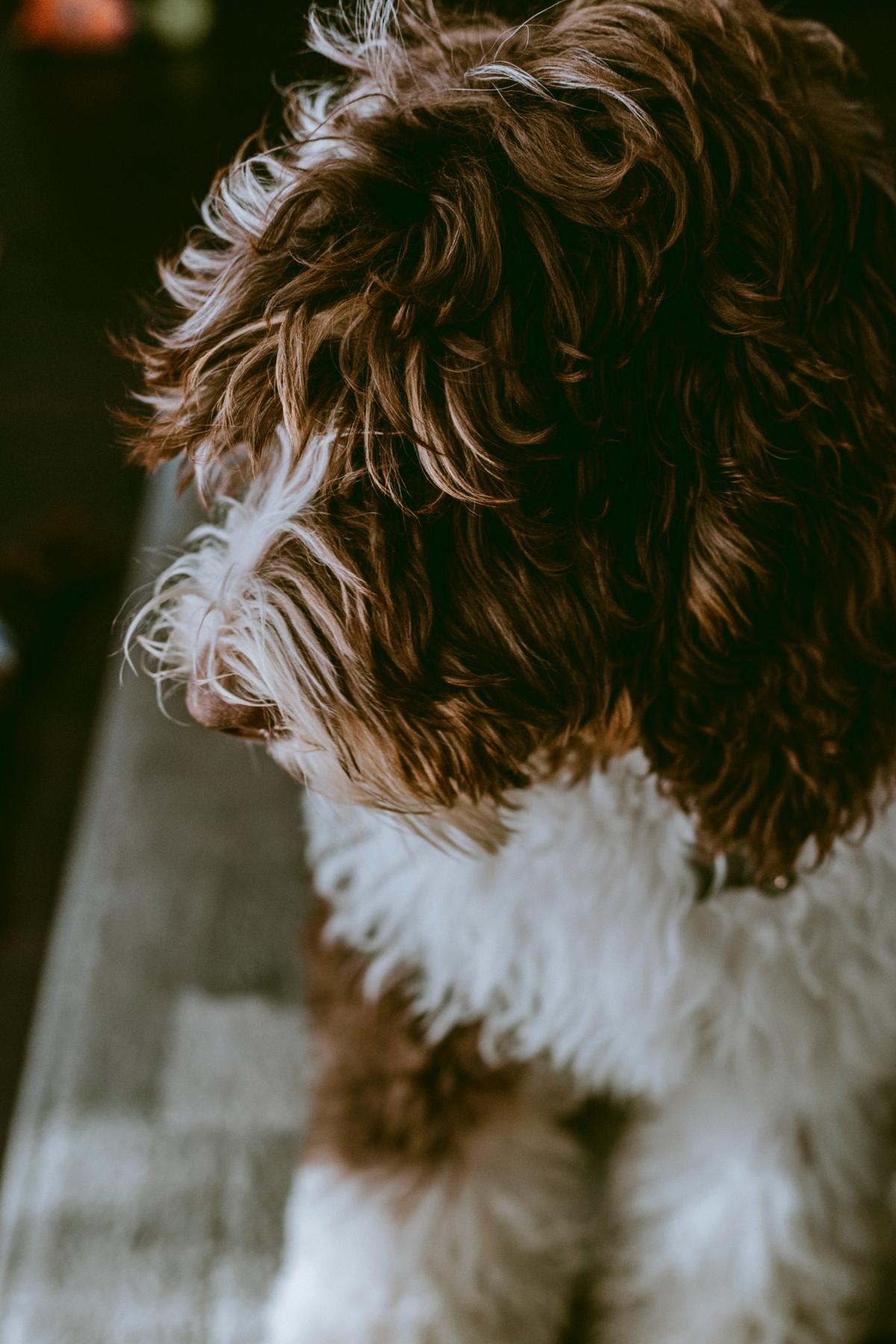 Dog Terrier Hair #420970