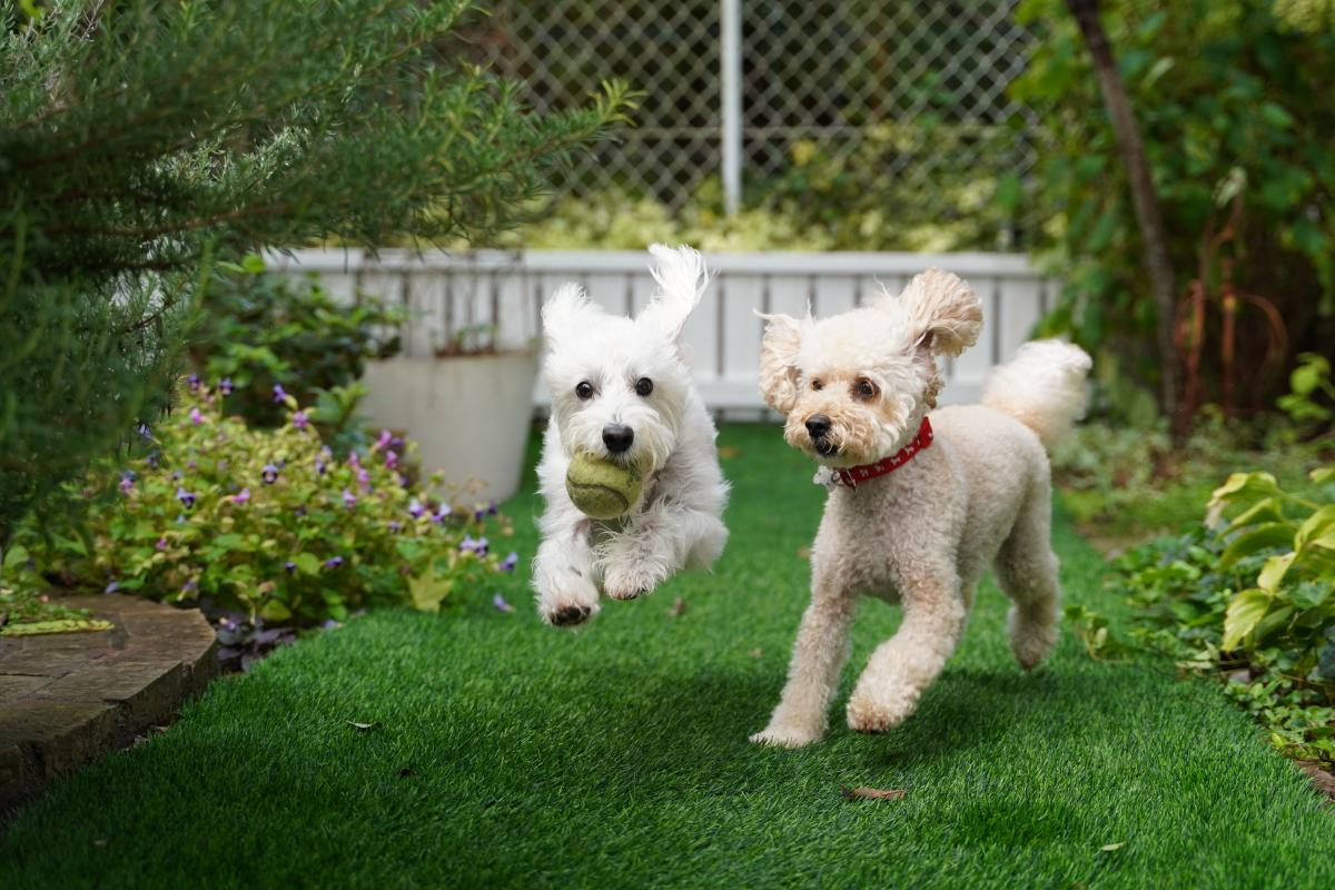 Dog Terrier Hunting dog