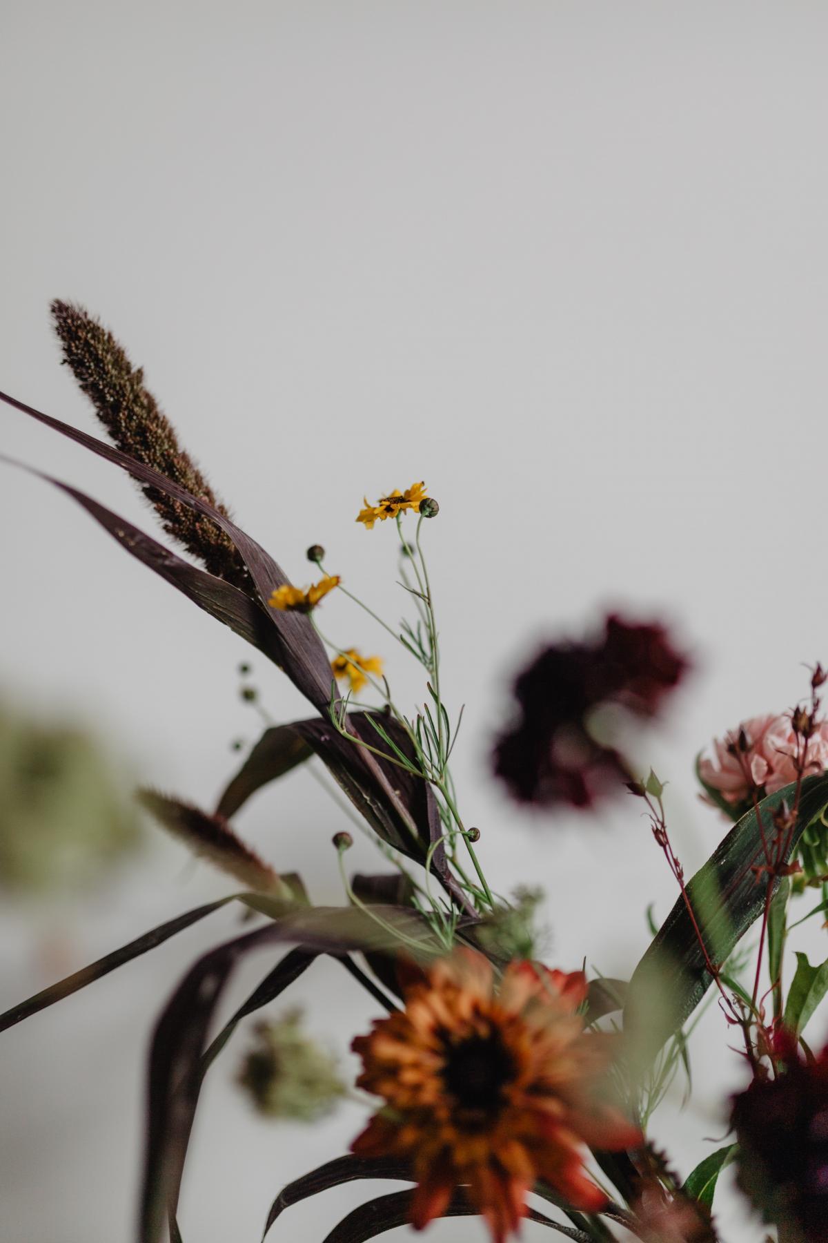 Plant Flower Vascular plant #421217