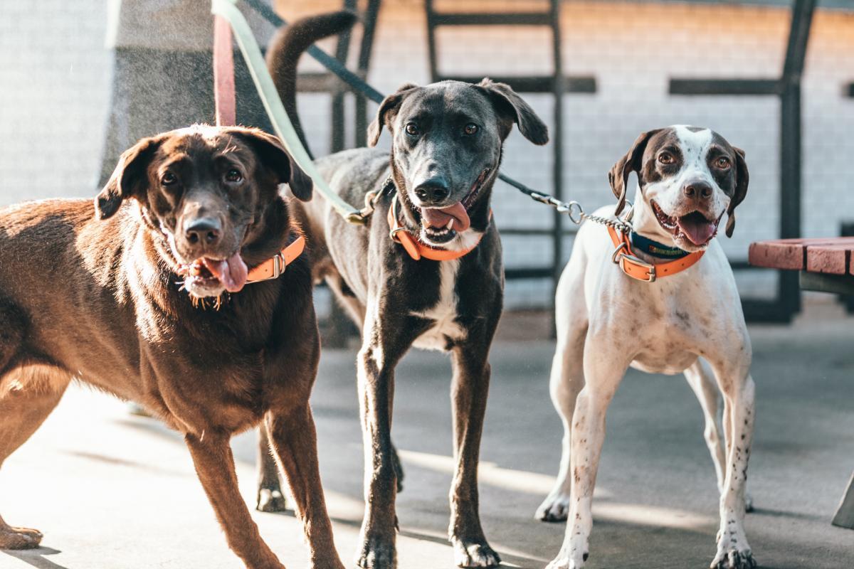 Dog Canine Pet #421512