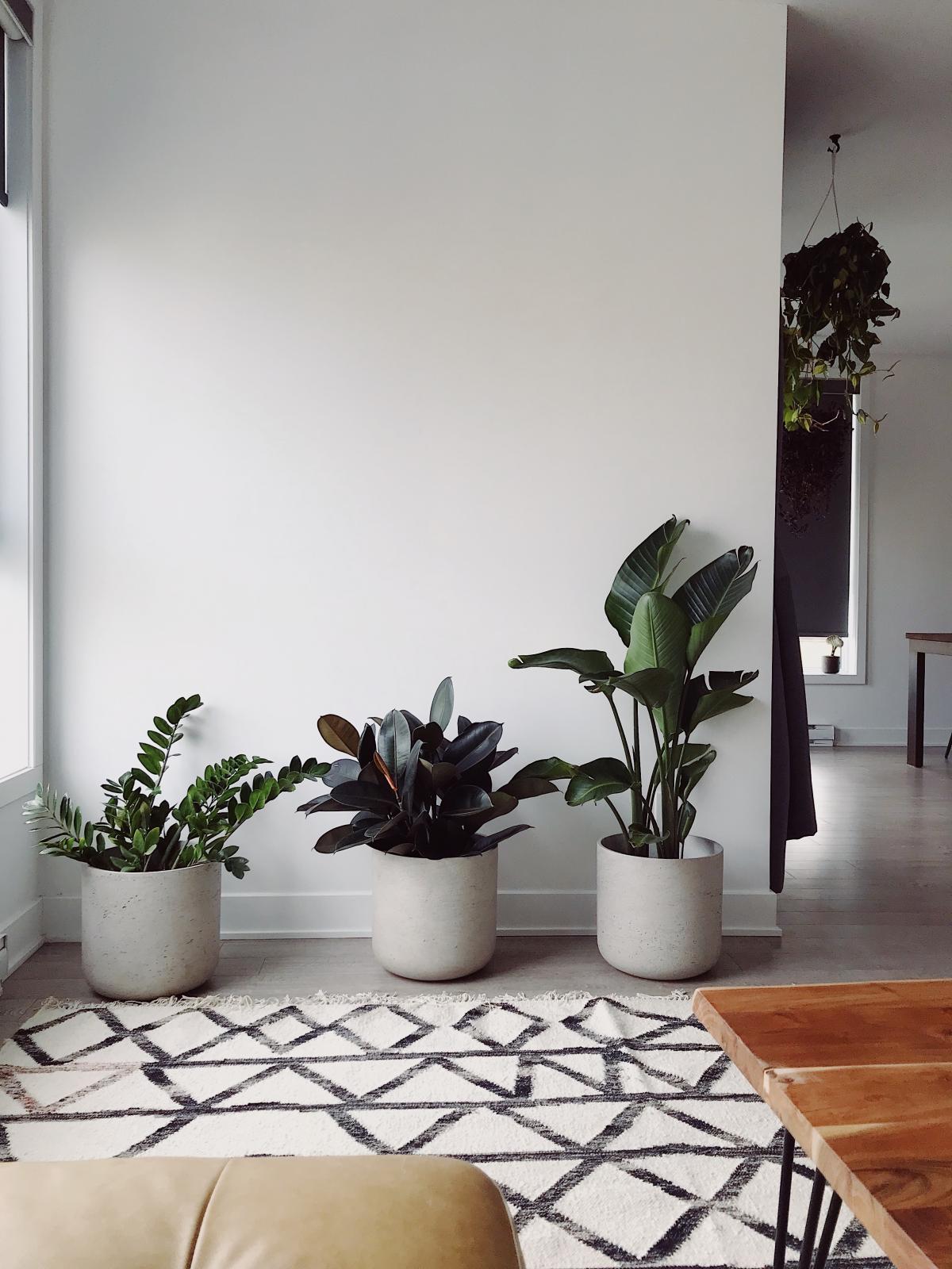 Interior Vase Room