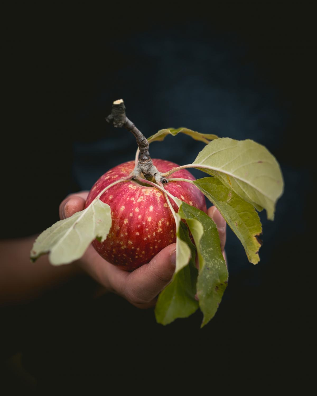Fruit Vitamin Berry