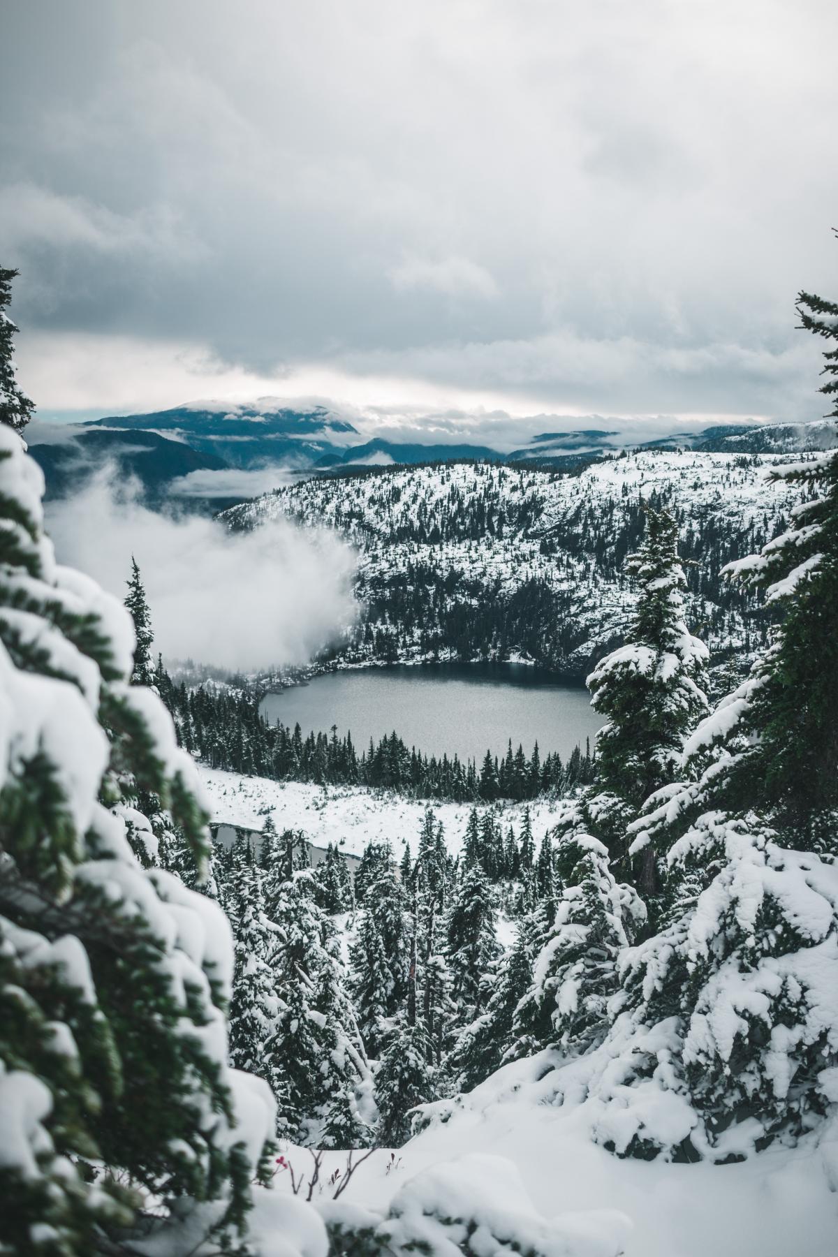 Fir Snow Mountain #421668