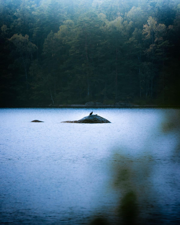 Water Landscape Boat