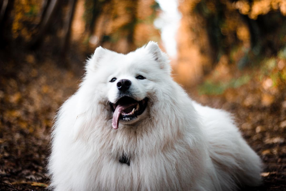 Dog Canine Domestic animal