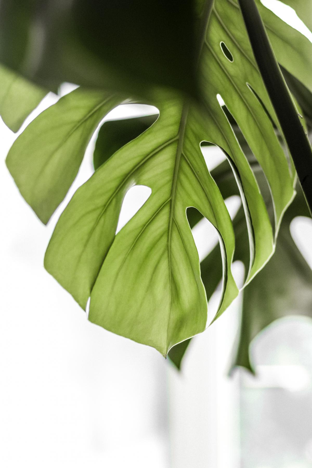 Plant Leaf Tree #422080