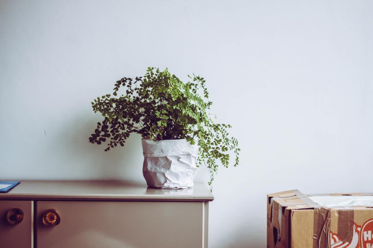 Bonsai Tree Woody plant #422094