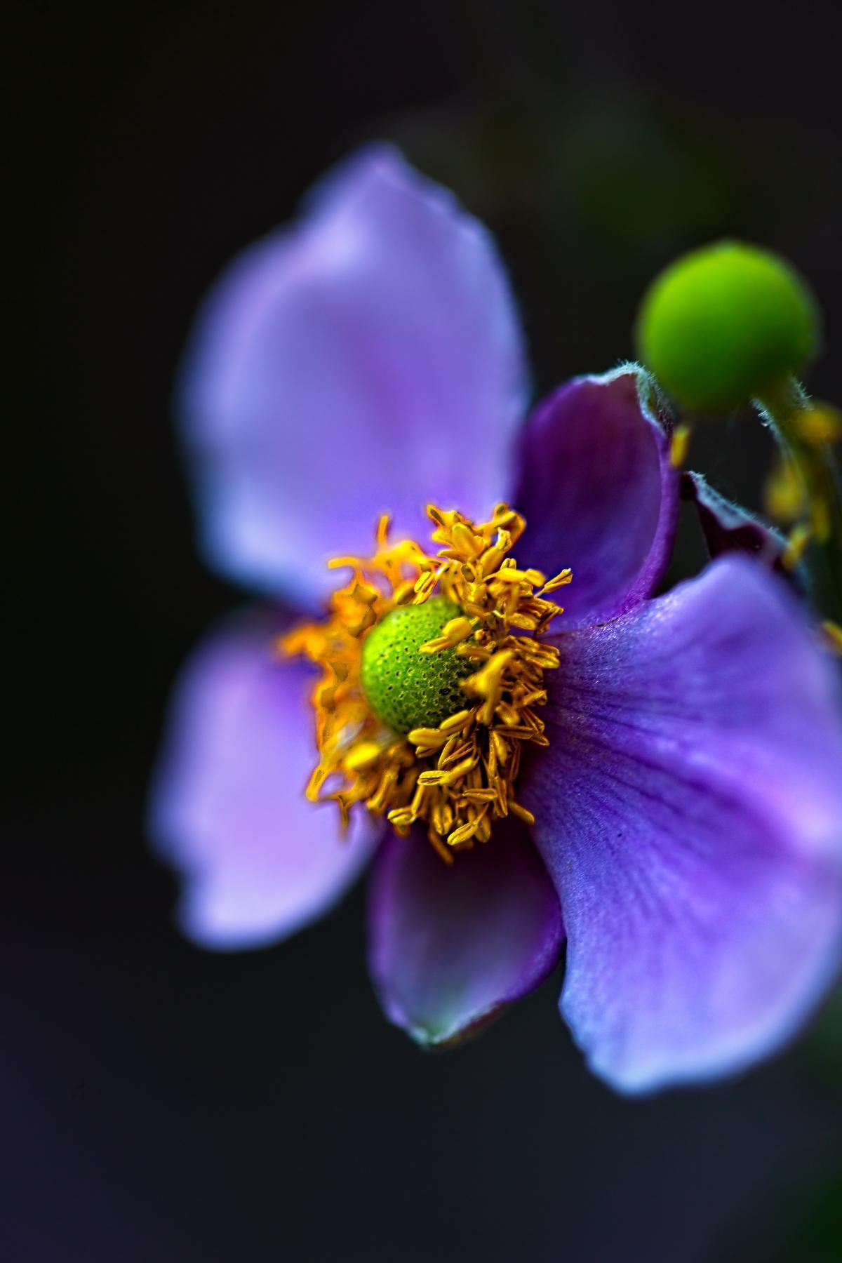 Herb Petal Plant #422196
