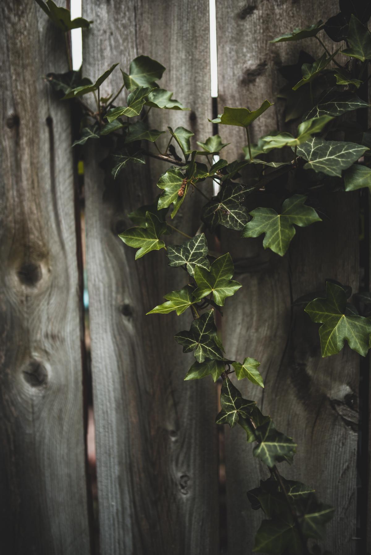 Tree Woody plant Vascular plant #422255