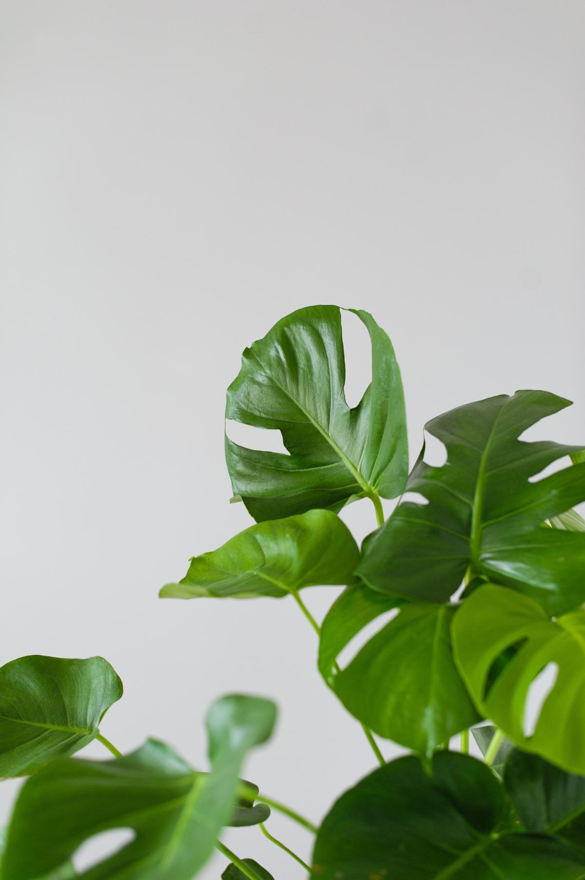 Leaf Plant Leaves #422362