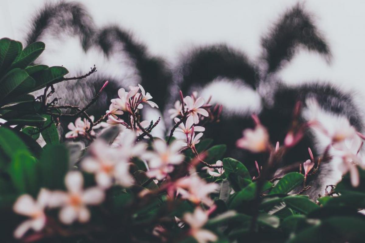 Soft Pink Petals Nestled In Bushy Green Foliage #422487