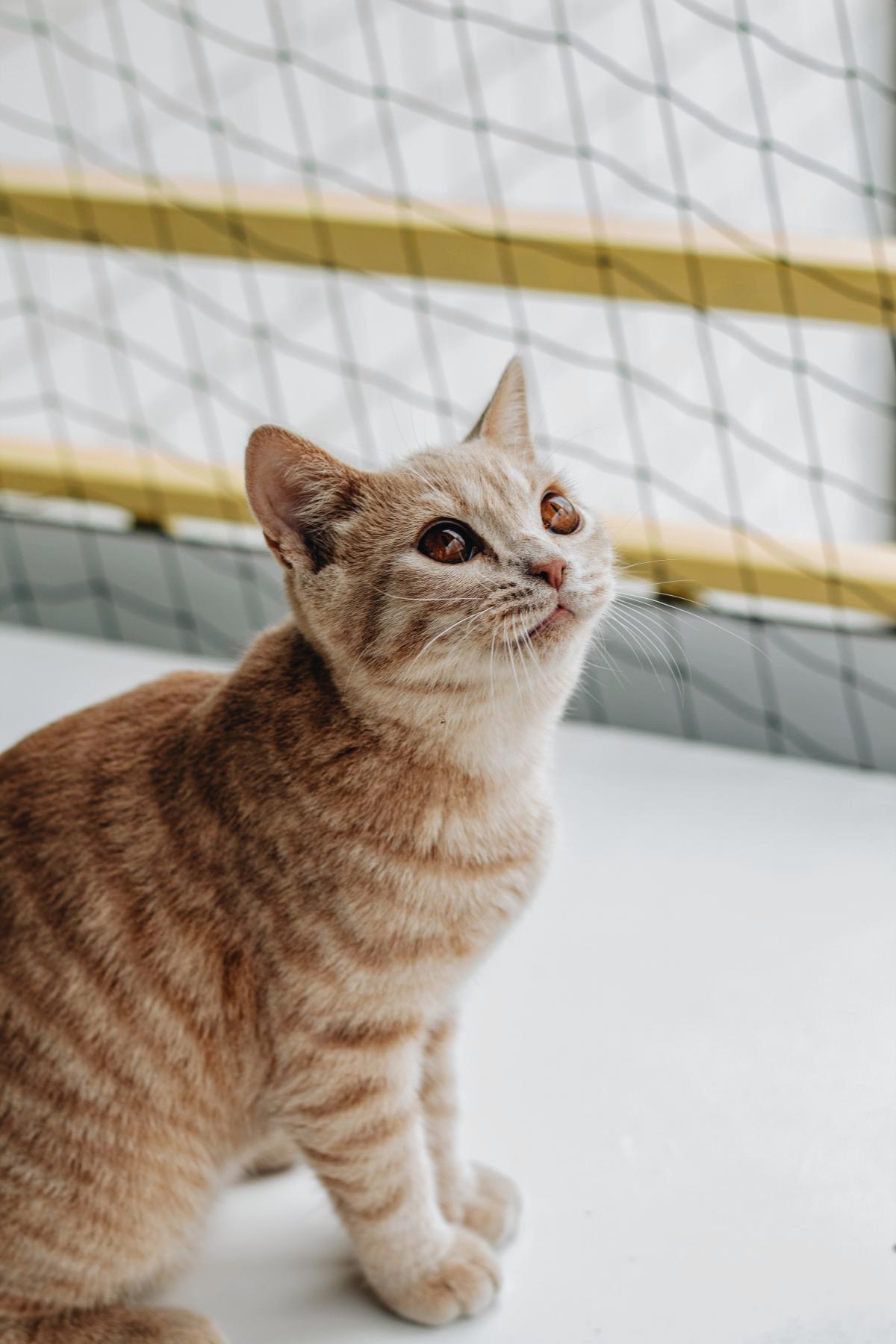 Kitty Domestic cat Cat #422546