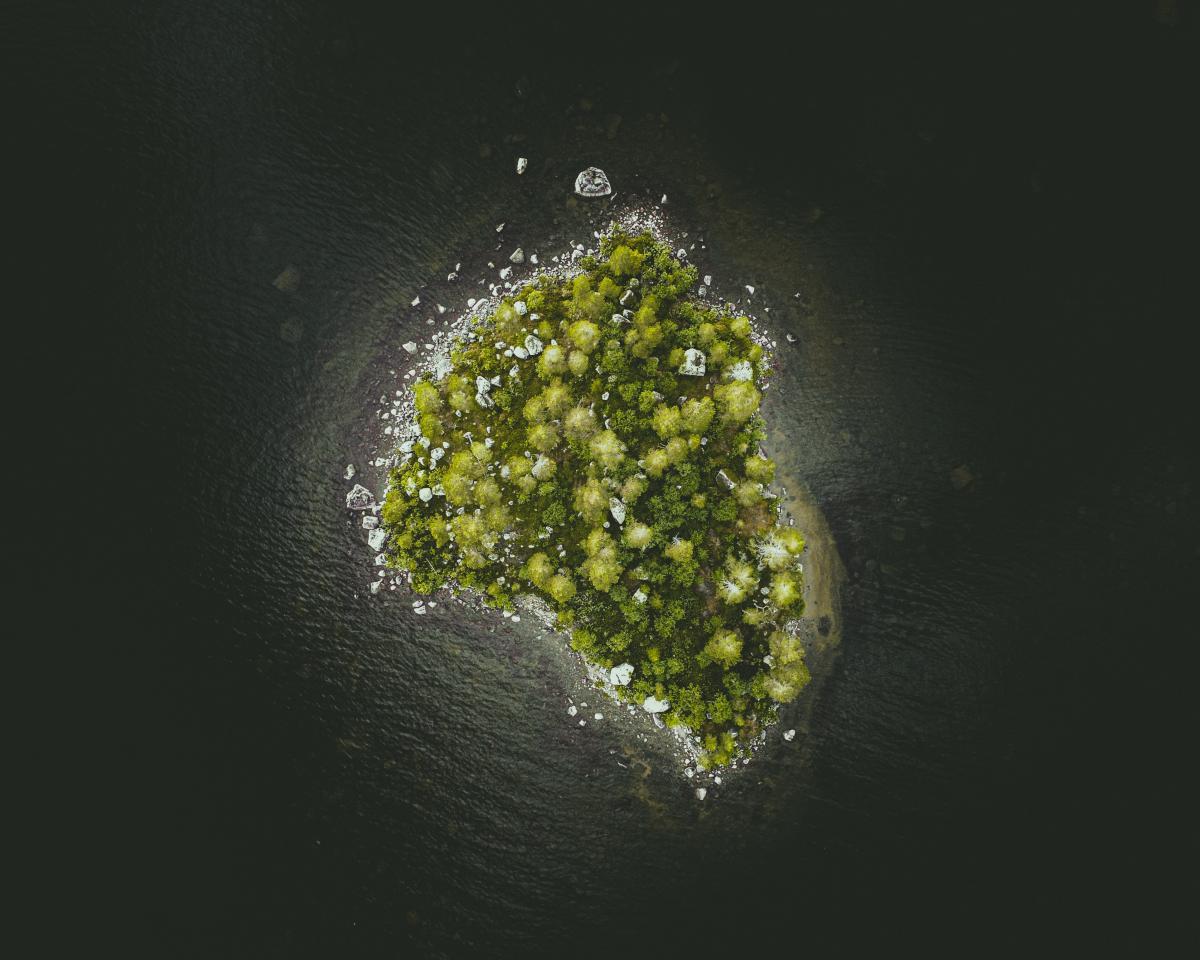 Broccoli Vegetable Produce #422668