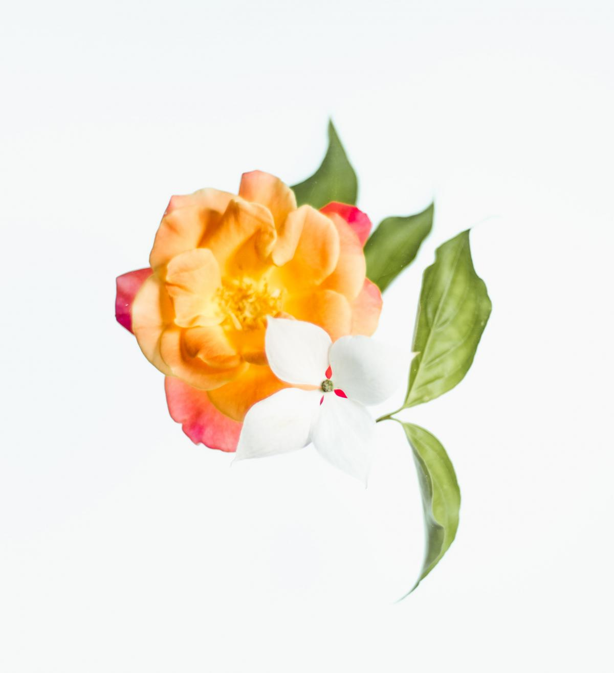 Bud Pink Flower