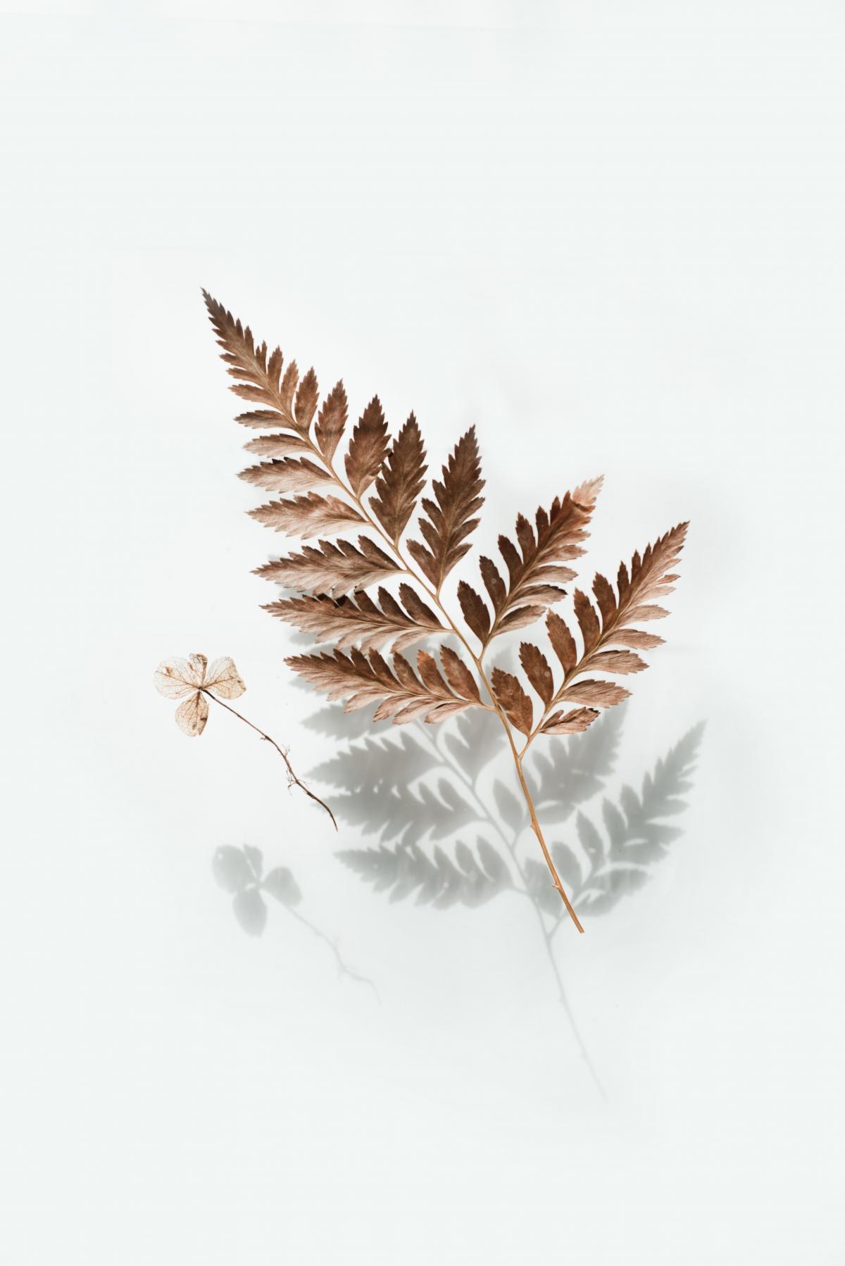 Fir Evergreen Leaf #422803