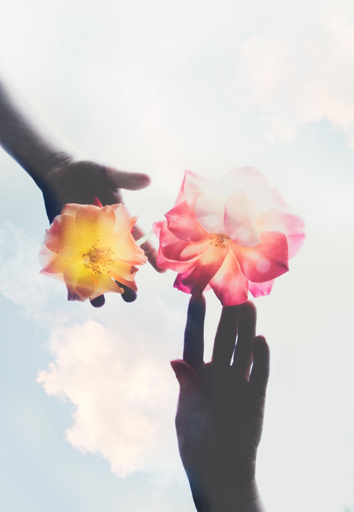 Flower Pink Flowers #422805