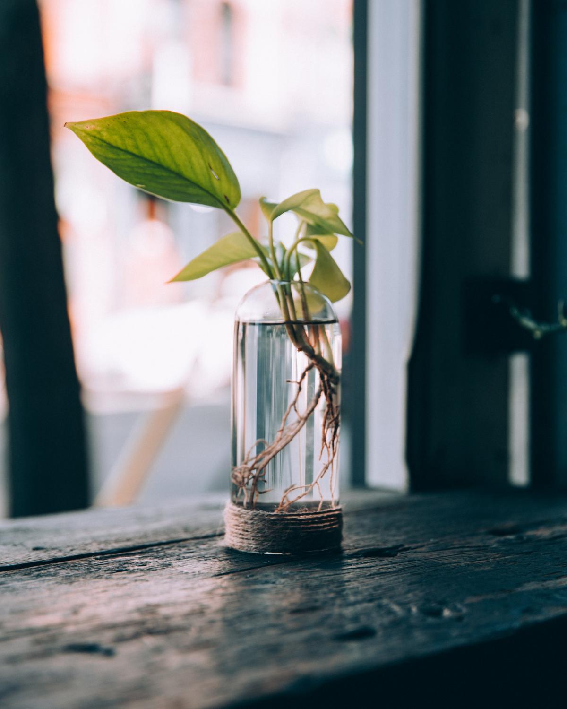 Plant Vase Window Free Photo #422877
