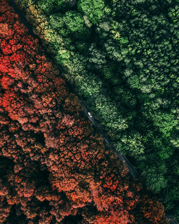 Tree Texture Grunge