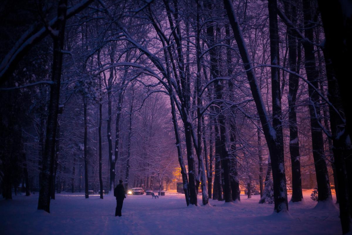 Tree Birch Forest