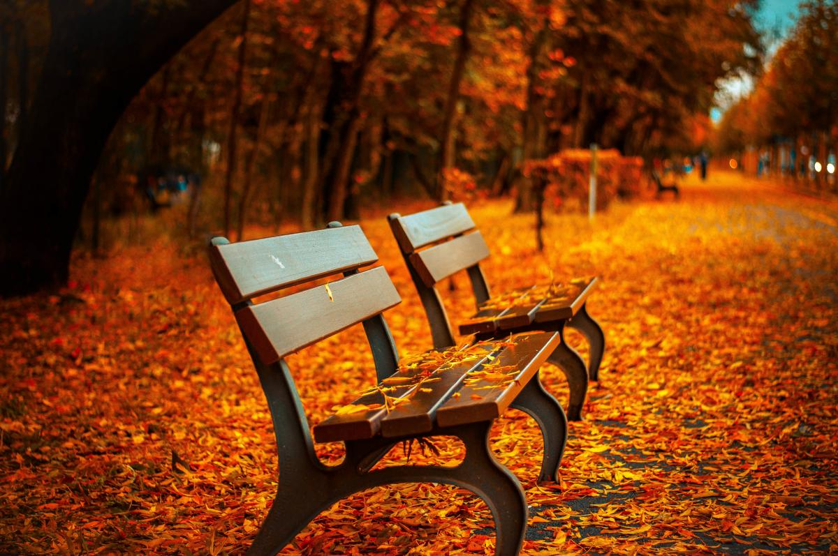 Autumn fall park bench  #423169