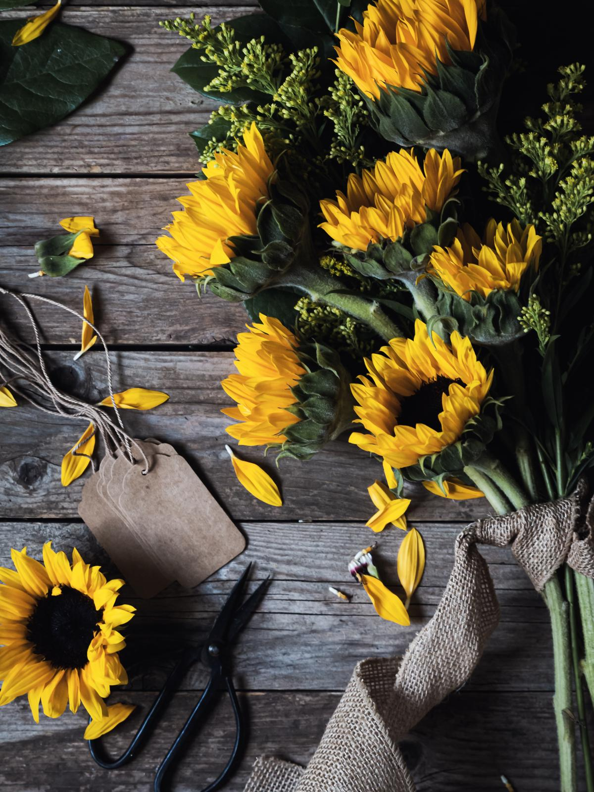 Sunflower Plant Flower