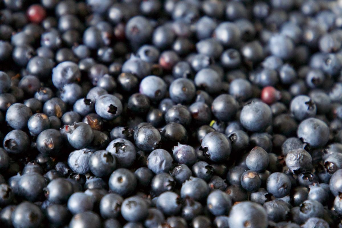 Blueberry Berry Edible fruit #423229