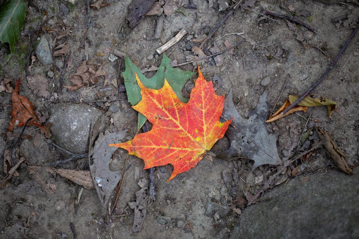 Fall Leaf Nature Free Photo #423295