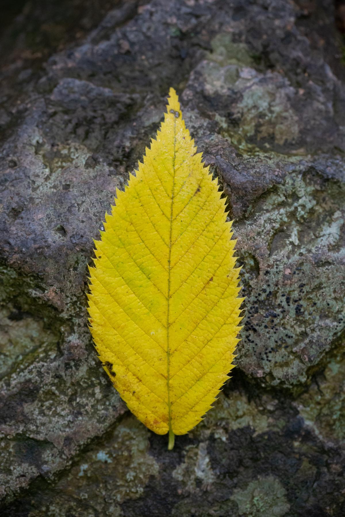 Tree Woody plant Vascular plant #423296