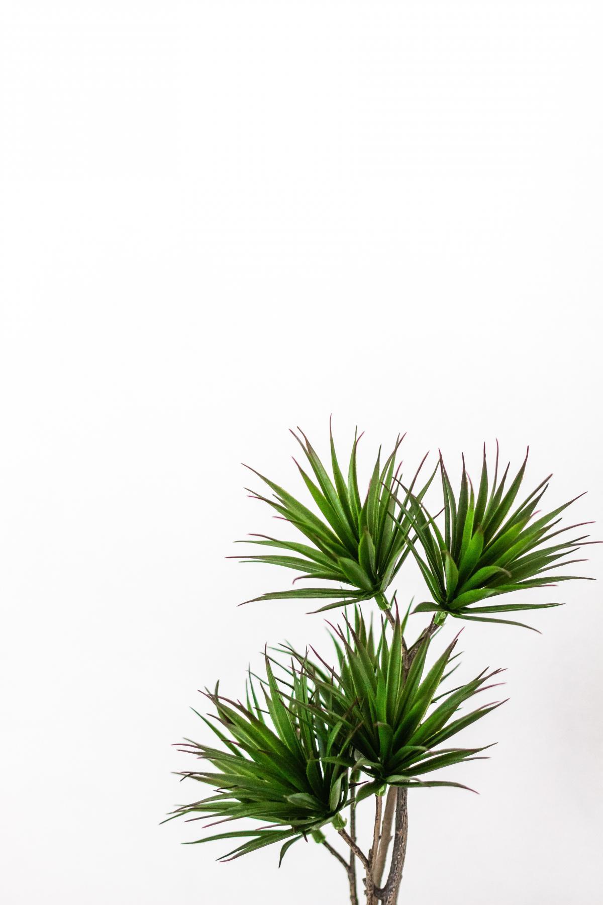 Evergreen Plant Fir #423393