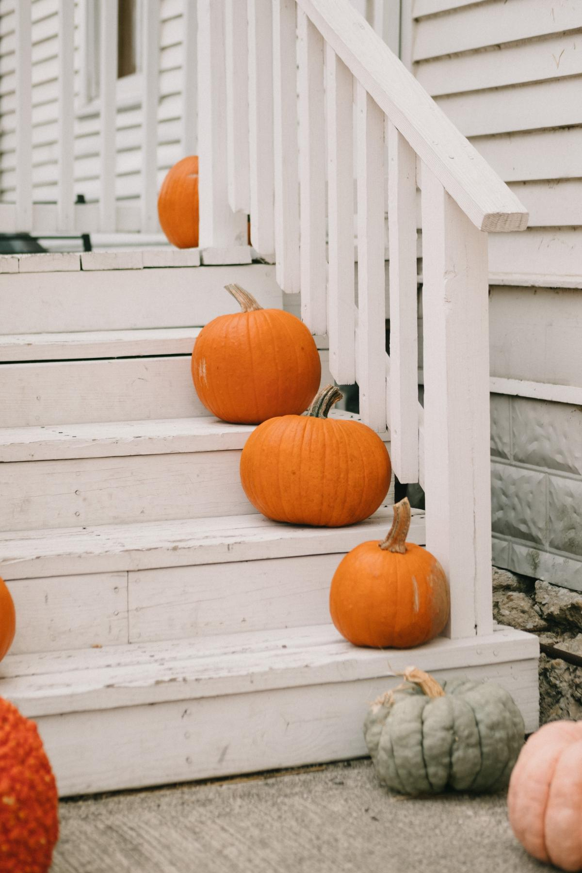 Pumpkin Squash Vegetable #423416