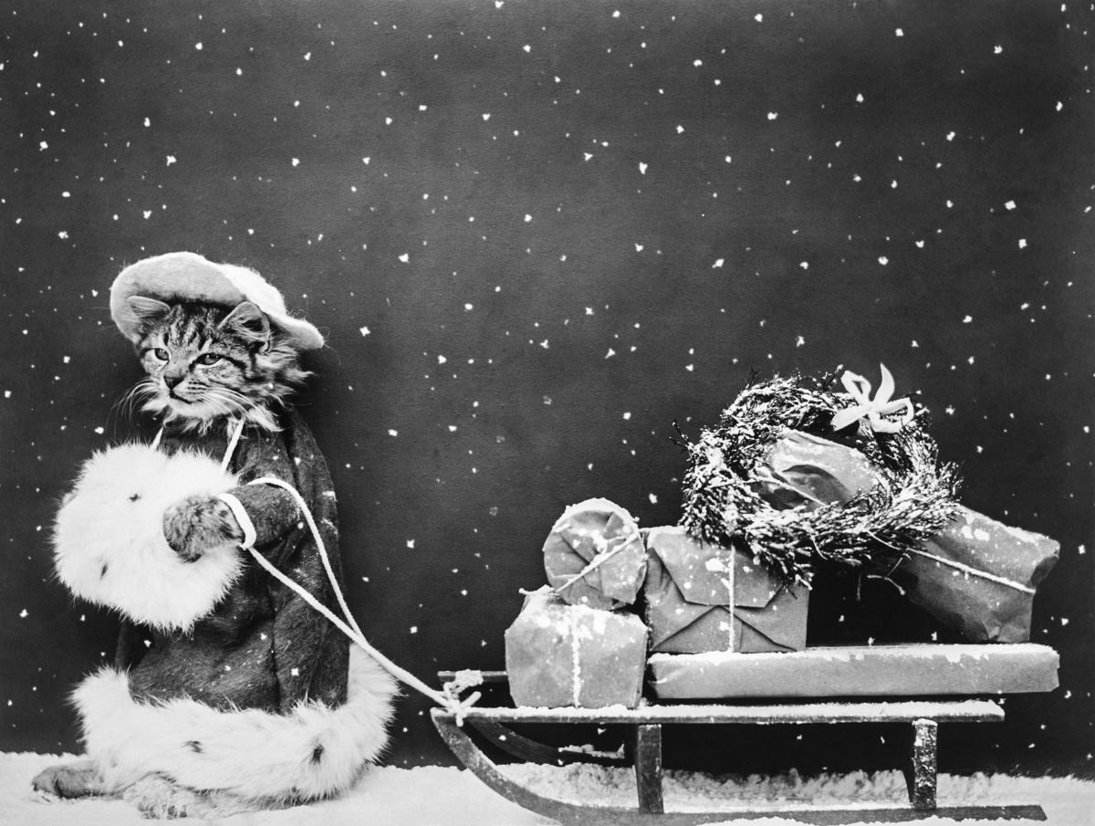 Santa Cat Still Image (1914) from The Miriam and Ira D. Wallach Division of Art, Prints and Photographs. Original from The New York Public Library.