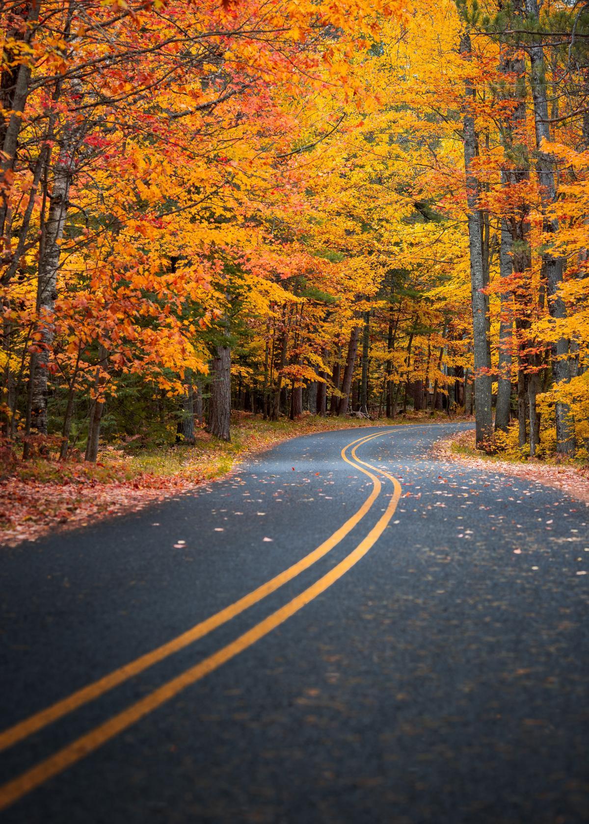 Bend Road Landscape