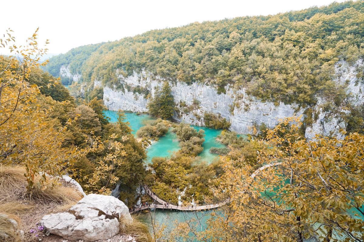 Tree Forest Landscape