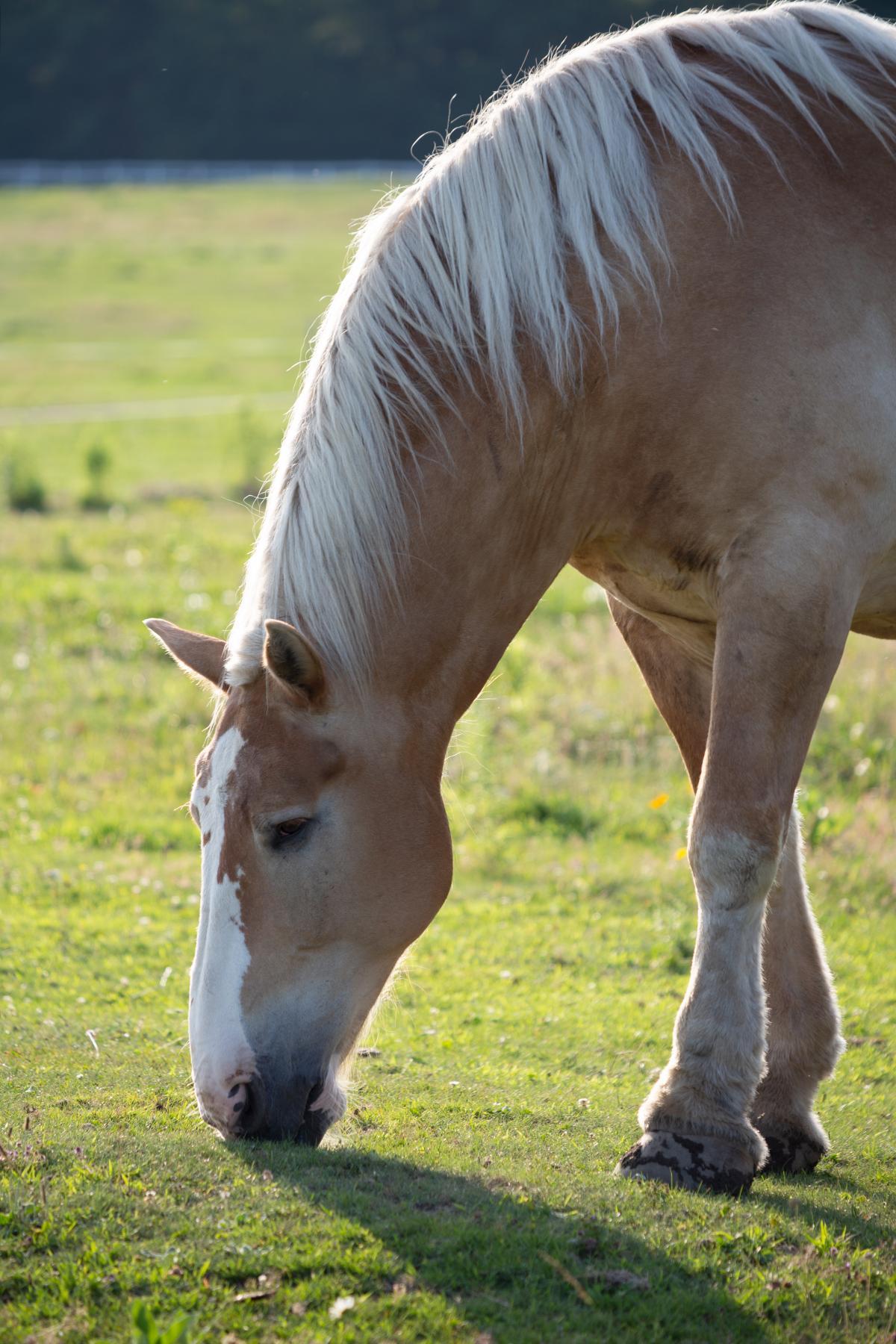 Horse Countryside Animal Free Photo #423735