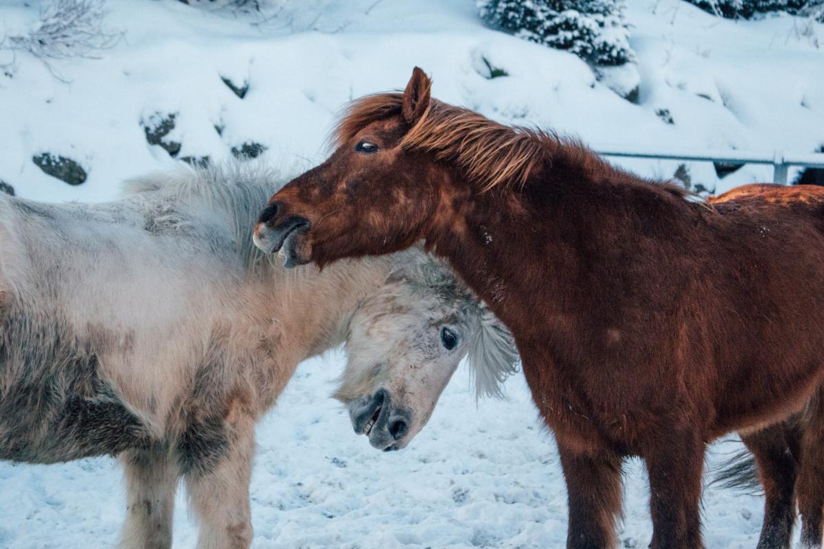 Horse Colt Young mammal #424166