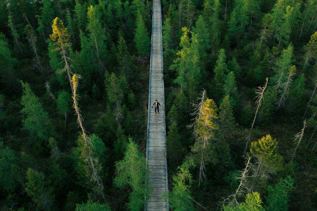 Suspension bridge Bridge Forest