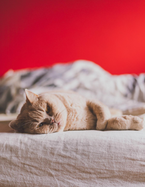 Kitty Cat Feline #424294