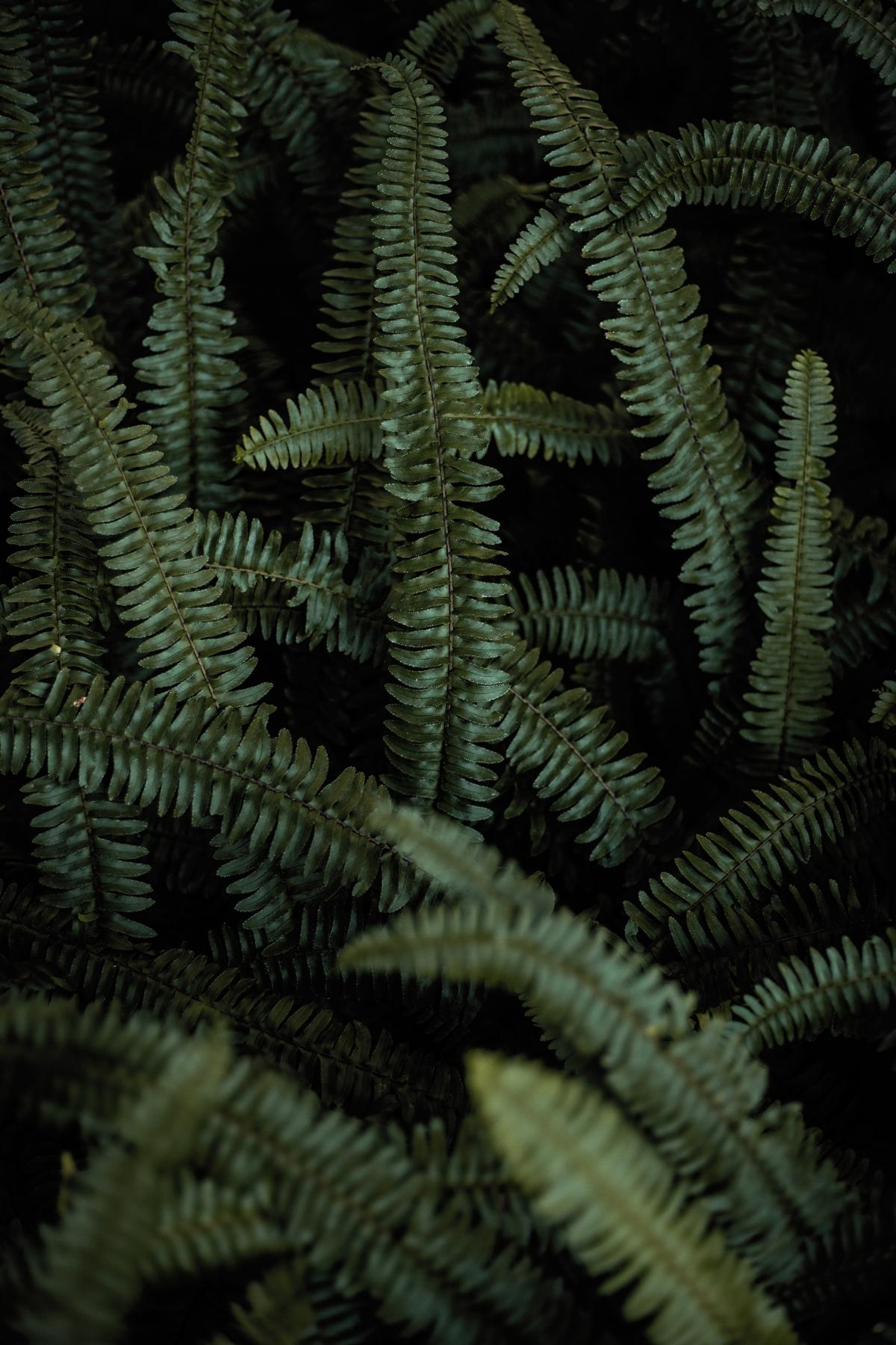 Feather star Echinoderm Fern