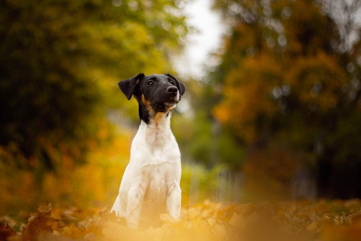 Dog Canine Pet #424433