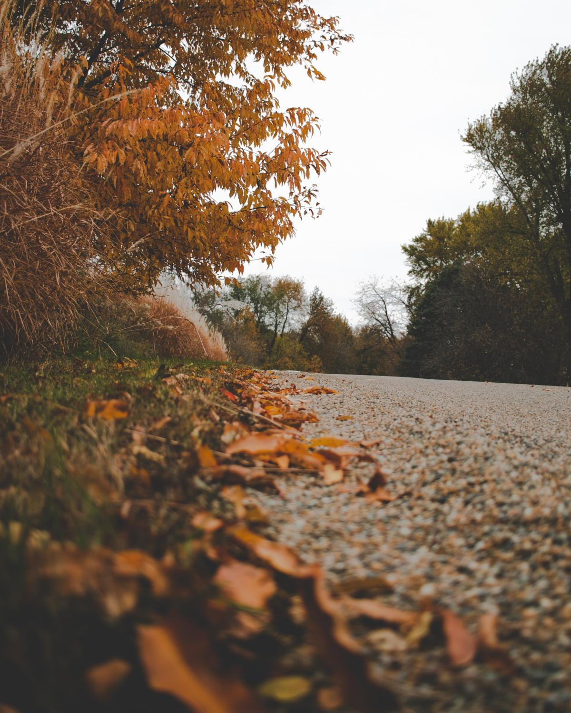 Tree Autumn Landscape #424649
