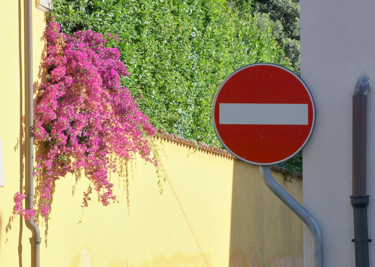 Tree Vascular plant Flowers