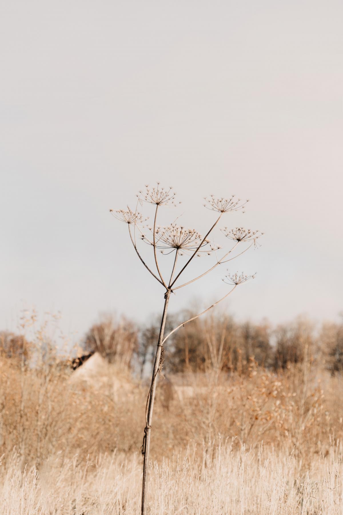 Tree Herb Vascular plant #424709