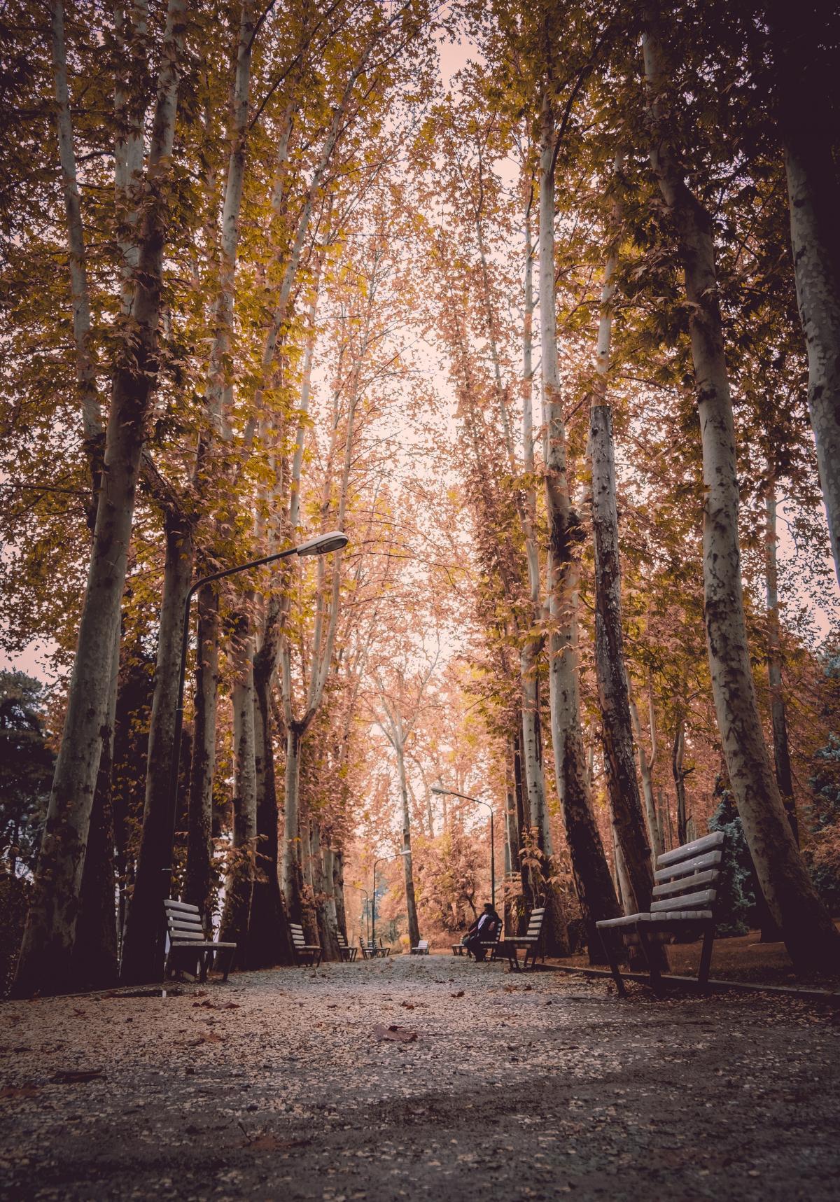 Tree Forest Birch #424748